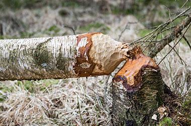 Abattage d'arbre Parempuyre