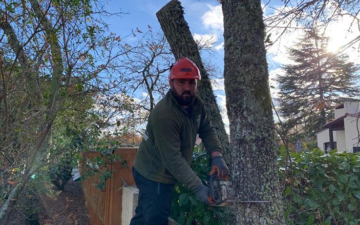 abattage d'arbre à Parempuyre