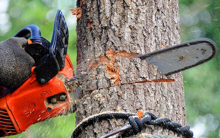 Abattage d'arbres Parempuyre