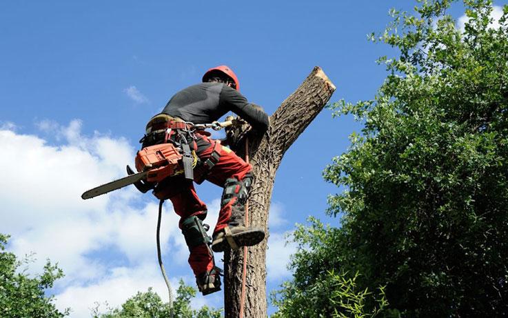 Etêtage d'arbres dangereux Médoc